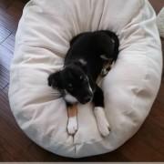 DIY Dog Bed Using Canvas Drop Cloth